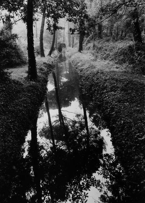 Canal in Woods